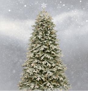 weihnachtsbaum_kaufen